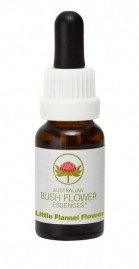 Floral Little Flannel Flower - 15 ml