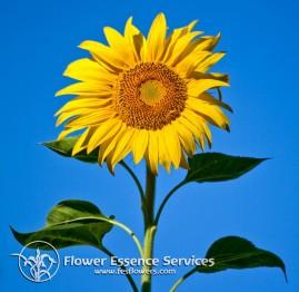 Floral Sunflower 7,5 ml